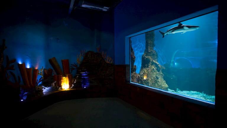 Aquarium de Lanzarote.