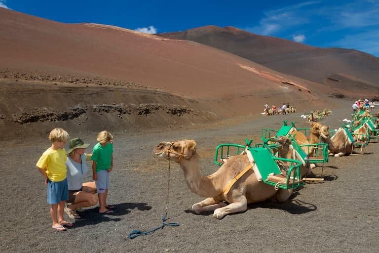 Montar en camello en el Parque Natural de los Volcanes.