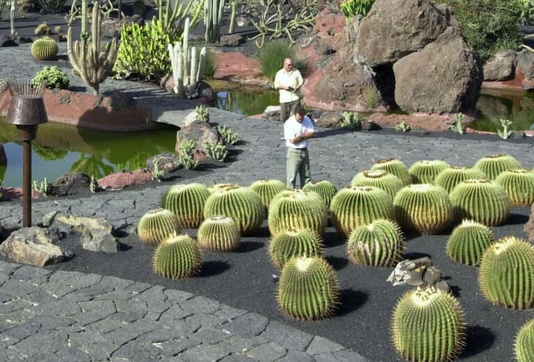 """El famoso cactus llamado """"el asiento de la suegra"""""""