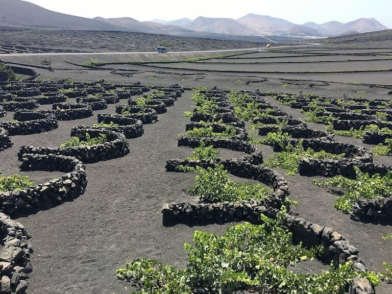 La zona vitivinícola de La Geria.