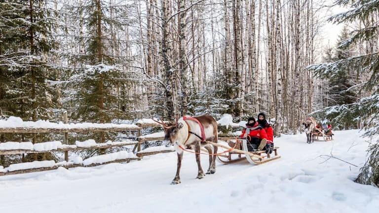 Trineo tirado por renos en Laponia