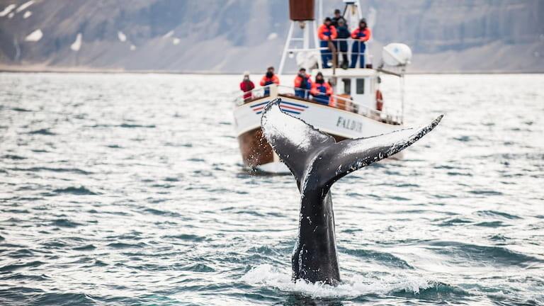 Safari de ballenas en Islandia