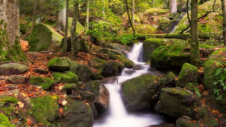 Cascada en el bosque de la Selva Negra