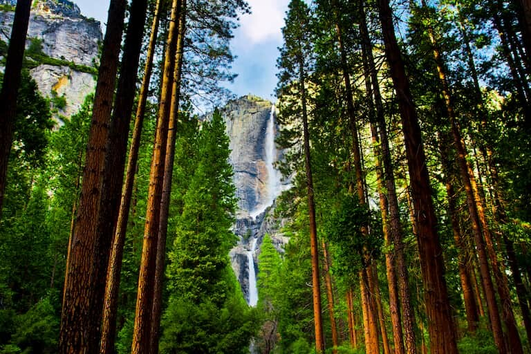 La cascada de Yosemite entre las secuoyas