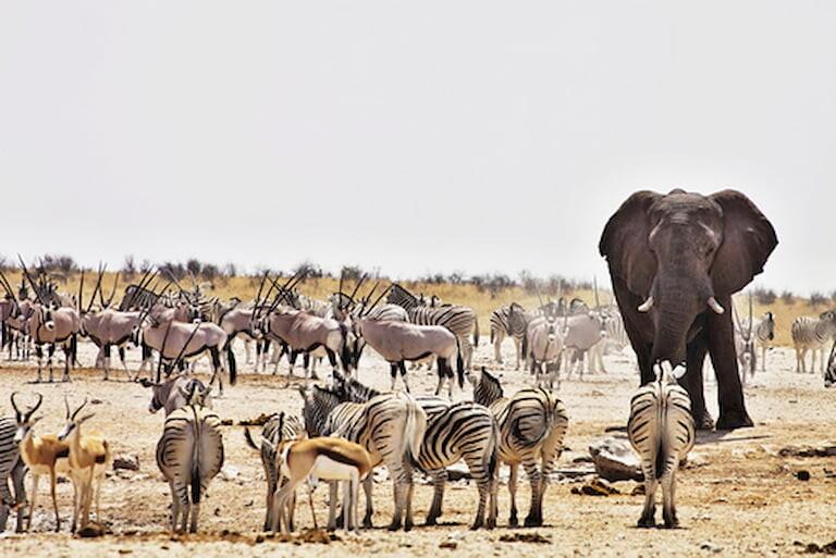 Animales del Parque Nacional de Etosha
